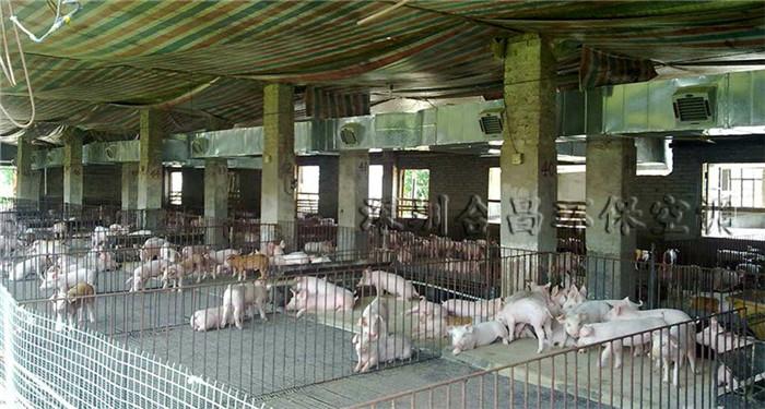 润东方环保空调养猪场降温工程